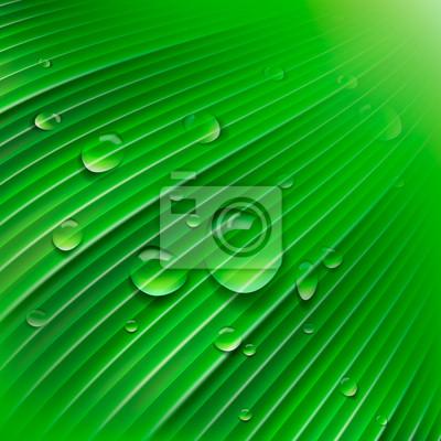 Grünes Blatt mit Wassertropfen, Vektor-Illustration eps10.