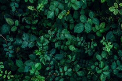 Fototapete Grünpflanze verlässt Hintergrund, Draufsicht. Natur-Frühling-Konzept