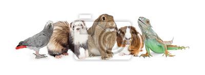 Fototapete Gruppe Kleine Haustiere über Weiß