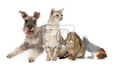 Fototapete Gruppe von Haustieren mit Hund, Katze und Kaninchen Vögel