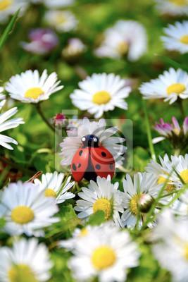 Grusskarte Ganseblumchen Mit Marienkafer Fototapete Fototapeten Mojo Erster Fruhlingstag Gluck Myloview De