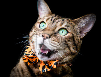 Halloween Katze Stock Photo Fototapete Fototapeten Hauskatze