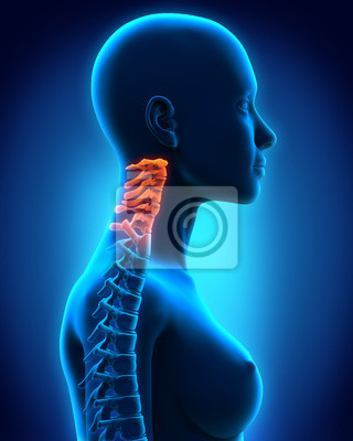 Halswirbelsäule anatomie fototapete • fototapeten ...