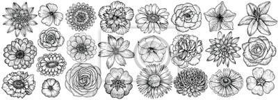 Fototapete Hand drawn flowers, vector illustration. Floral vintage sketch.
