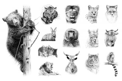 Fototapete Hand drawn set of 14 animals, sketch graphics monochrome illustration on white background