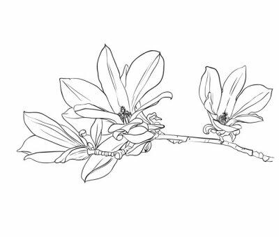 hand gezeichnet blumen magnolien fototapete fototapeten schraffierung sch ne graphit. Black Bedroom Furniture Sets. Home Design Ideas