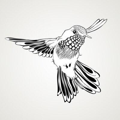 Fototapete Hand gezeichnet fliegenden Summen Vogel Vintage-Stil.