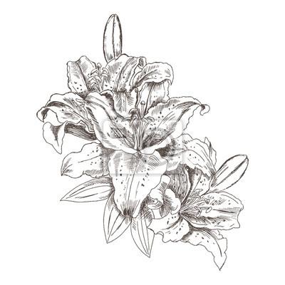 hand gezeichnete skizze blumen tiger lilien blume tiger lily fototapete fototapeten von hand. Black Bedroom Furniture Sets. Home Design Ideas