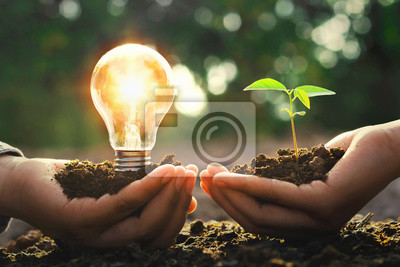 Fototapete hand holding lightbulb with small tree and sunshine. concept energy power in nature