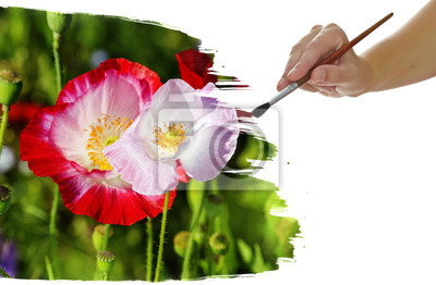 Hand Malen Bild Mit Roten Mohnblumen Fototapete Fototapeten Pinsel