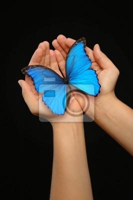 Hände halten einen blauen Schmetterling vor einem dunklen Hintergrund