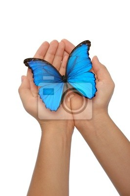 Hände halten einen blauen Schmetterling vor einem weißen Hintergrund