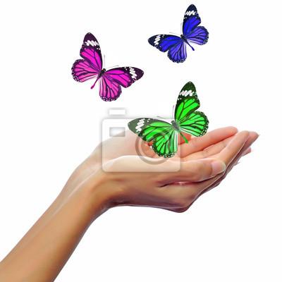 Hände Loslassen Schmetterlinge