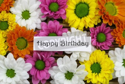 Fototapete Happy Birthday Card With Colorful Santini Flowers