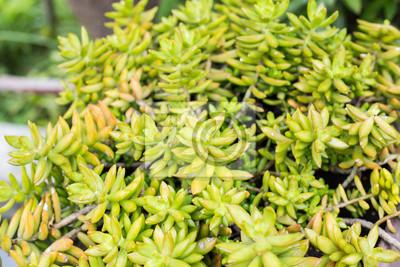 Gartendekoration | Haus Und Gartendekoration Mit Kaktus Fototapete Fototapeten Diy