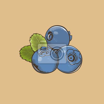 Heidelbeere im Weinleseart. Farbigen Vektor-Illustration