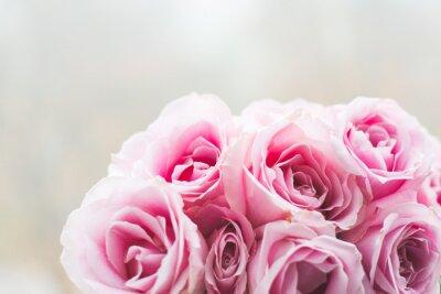 Fototapete Helle rosa Rosen Hintergrund