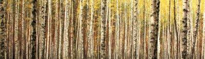 Fototapete Herbst Birkenwald Landschaft Panorama