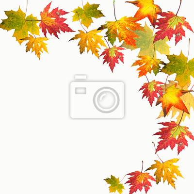 Herbst Fallende Bunte Blatter Fototapete Fototapeten