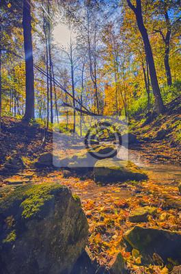 Herbst Wald Blick Ontario Kanada Fototapete Fototapeten Idylle