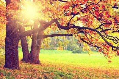 Fototapete Herbstlandschaft