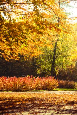 Fototapete Herbstlandschaft im Park