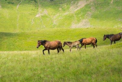 Fototapete Herde von Pferden zu Fuß entlang einer Bergwiese