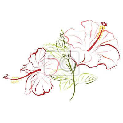 Hibiskus (schuh-blume, porzellan-rose). hand gezeichnet vektor ...