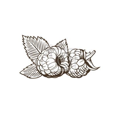 Himbeere im Weinleseart. Linie Kunst Vektor-Illustration