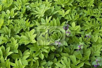 Hintergrund des grünen Blatt