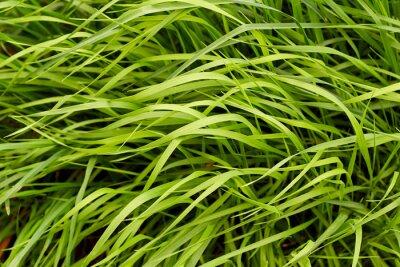 Fototapete Hintergrund des grünen Grases