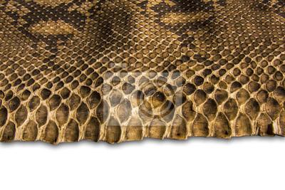 Hintergrund Schlangenhaut.