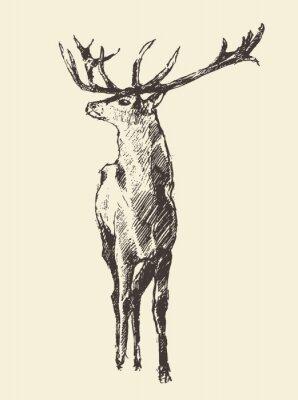 Fototapete Hirsch Gravur, Jahrgang Illustration, Vektor