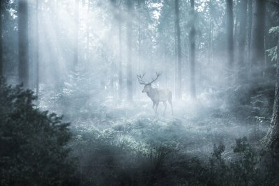 Fototapete Hirsch im nebeligen Wald