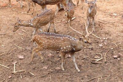 Hirsche sind Pflanzenfresser mit weißen Flecken am Körper.