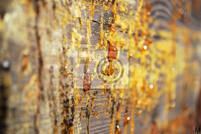 Fototapete Holz Textur