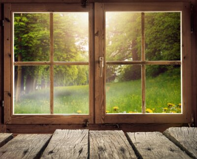 Fototapete Holzhütte mit Blick auf eine Waldlichtung im Frühling / Frühsommer bei Sonnenschein
