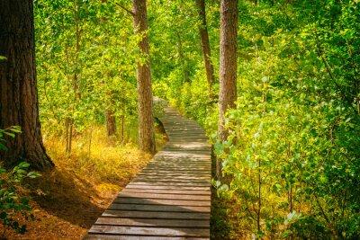 Fototapete Holzweg im Wald