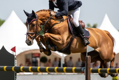 Fototapete Horse Jumping, Equestrian Sports, Show Jumping themed photo.