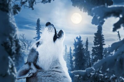 Fototapete howling to the moon