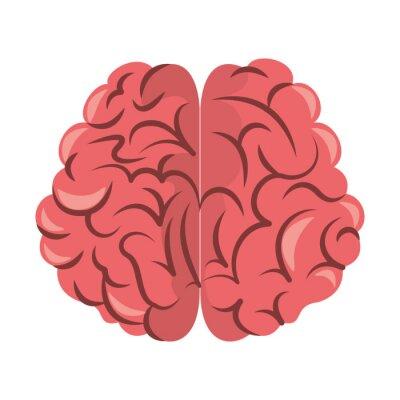Human brain intelligence symbol isolated