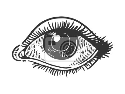 Fototapete Human eye engraving vector illustration. Scratch board style imitation. Black and white hand drawn image.