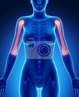 Humerus blauer röntgen - knochenscan fototapete • fototapeten Elle ...