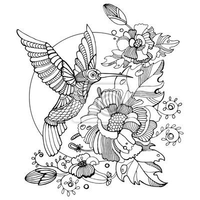 Hummingbird Ausmalbilder für Erwachsene Vektor