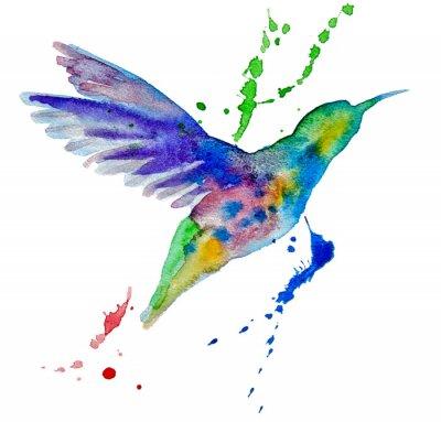 Fototapete hummingbird multicolored on white background