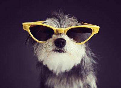 Fototapete Hund in den Gläsern 2