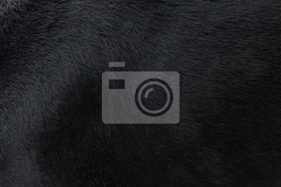Fototapete Hund Pelz Textur