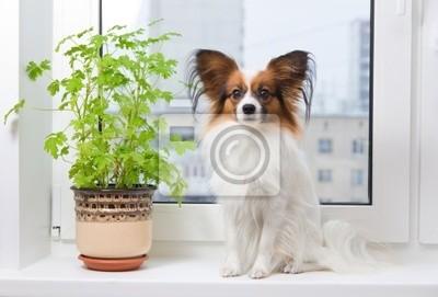 Hund und Blume auf Fenster