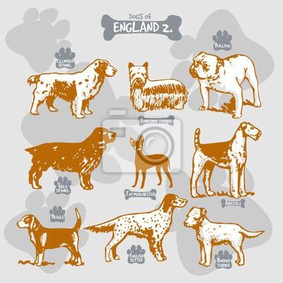 Hunde Rassen Der Welt Vektor Zeichnen Und Shilouette Auf Isolierte