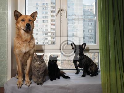 Hunde Und Katzen Sitzen Lustig Auf Einer Breiten Fensterbank